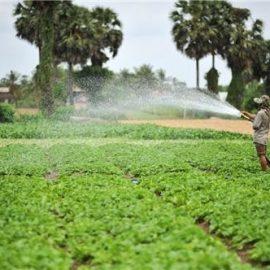 Án lệ số 35/2020/AL về người Việt Nam trước khi định cư ở nước ngoài giao lại đất nông nghiệp cho người ở trong nước sử dụng